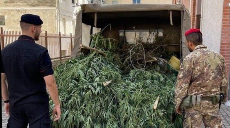 Droga a San Nicandro Garganico: scoperte piante e marjuana in essiccazione all'interno di un ovile. I Carabinieri arrestano sannicandrese.